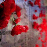 war_fallen